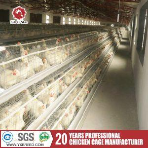 De Kooi van de Kip van de Kippen van het eierleggen voor Verkoop