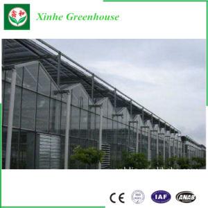 Barato Multi Span Agricultureal estufa de vidro