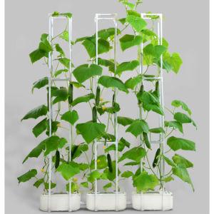 3PC inteligente sistema de cultivo em hidroponia