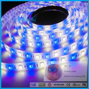 striscia dell'indicatore luminoso LED della cinghia di 12V SMD 5050 60LED/M RGBW