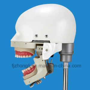 Acero inoxidable de alta calidad para la Universidad fantasma Dental