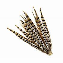 Faisão de alto grau de penas de ornamentação longo recifes naturais Lady Amhurst Wholesales de fábrica