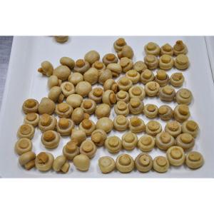 Preiswerte Preis-gute Qualitätschampignons in Büchsen konservierter Pilz