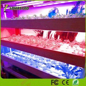 12W T8 Red-Blue cambia de color violeta crecer la barra de luz LED para las plantas de interior