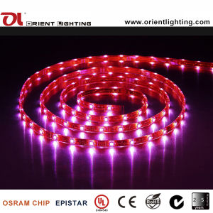 Ce UL 24VCC 7.2W/M LED 5060 de la luz de tira flexible de alta potencia