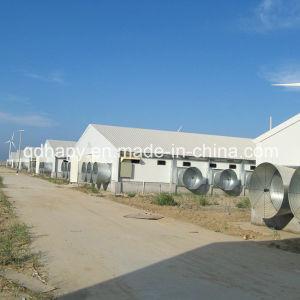 最上質のPrefabricated Poultry FarmおよびPoultry House