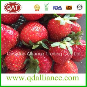 新しい穀物のIQFによってフリーズされるいちごか凍結するフルーツ