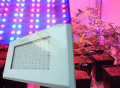 Nueva llegada 9 de la banda liderada crecer las luces, el espectro completo de 600W de alta potencia de la luz de las plantas crecen Chip 3W