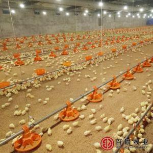 Conjunto completo de equipamentos de exploração de aves de capoeira para frangos de corte
