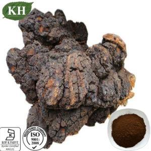 Extrato de cogumelo Chaga puros e naturais polissacarídeos 20%, 25% por UV