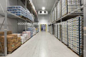 Kundenspezifische große frische haltene Kaltlagerungs-und Aufbereitenfabrik