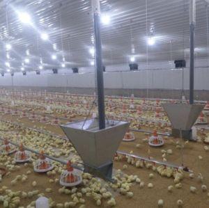Granja de pollos parrilleros automático Equipo para avicultura Equipo con acceso gratuito a las aves de corral arrojar Design
