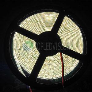 Alta striscia luminosa 120LEDs/M di qualità SMD2835 LED di CC 12V/24V
