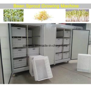 Automatique de l'herbe de soja Blé Orge Sprout Machine croissante