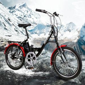 36V 250W Electric-Assist Motor sin escobillas de bicicletas