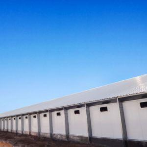 Qualitäts-bringen vorfabriziertstahlkonstruktion-Geflügel für Verkauf unter