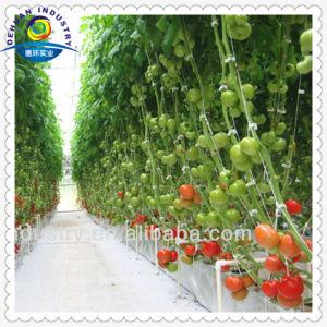 Equipamentos agrícolas e Estufas Caçamba Neerlandês