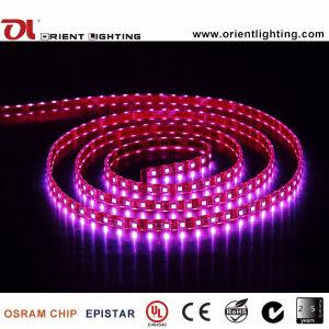UL CE impermeável IP67 12VDC5050 SMD LED flexível RGB luz de faixa