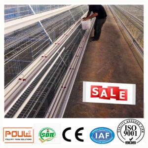 Het automatische Systeem van de Kooi van de Laag van de Kip van het Landbouwbedrijf van het Gevogelte