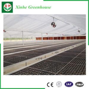 Filme Multi Span Agricultura Green House para produtos hortícolas