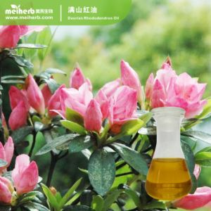 Herb Calming Huile essentielle de l'huile Daurian Rhododendron