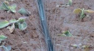 Cinta de goteo HDPE 30cm de distancia