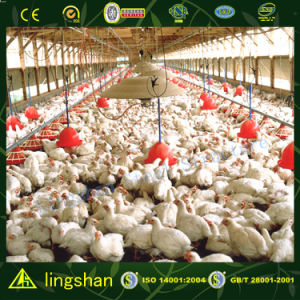 Стальное Chicken House в Австралии--ISO9001: 2008