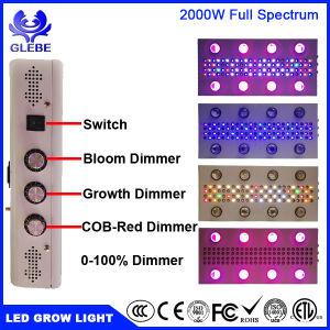De beste LEIDENE Installatie kweekt Lichten 1000W 1200W