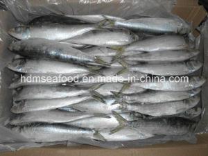 Vollständige Fround gefrorene Sardine-Fische (Sardinelle aurita)