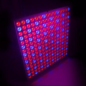 La pianta del LED coltiva Light/SMD2835 coltiva l'indicatore luminoso di comitato 14W Red&Blue
