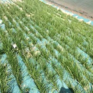 Tessuto non tessuto di agricoltura calda di vendita per il coperchio della pianta di protezione antigelo
