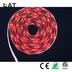 SMD5050 RGB 3M 30/60/120LED TIRA DE LEDS flexible