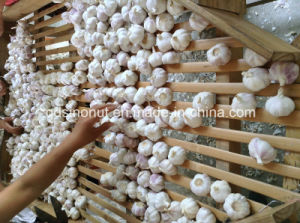 새로운 Harvest Pure White Garlic (크기 5.5cm&up)