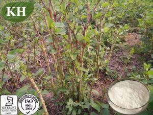 El Resveratrol de Polygonum cuspidatum Extracto de raíz puede Anti-Oxidant