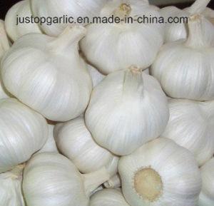Frais de l'ail blanc pur/Normal