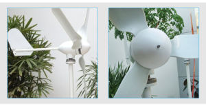 China 500W 12V / 24V de la turbina de viento con precio razonable.