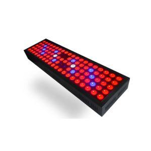 高品質の低価格300W完全なスペクトルLEDはライトを育てる