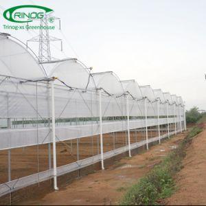 O baixo custo dos produtos hortícolas túnel plástico green house para a agricultura