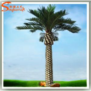 5 metros de Piscina Palmeiras Palmeira artificial de decoração