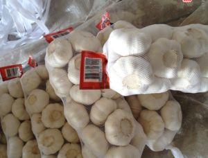 Ajo Blanco puro frescas procedentes de China (2018)