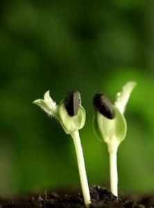 Extrato de soja isoflavonas de soja 20%-80% (HPLC)