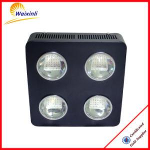 L'alto lumen 500W LED si sviluppa chiaro per 2 anni di garanzia