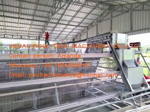 De Apparatuur van het Landbouwbedrijf van het Gevogelte van het Eiland van Seychellen - de Kooi van de Kip van de Batterij & de Kooi van de Laag met de Automatische Schone Machine van de Mest van de Kip in de Kippenren van de Kip