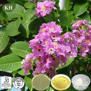 자연적인 건강 Banaba 잎 추출 1%~98% Corosolic 산