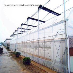 トマトのきゅうりの冬の植わることのための野菜鉄骨構造のマルチスパンの農業の温室