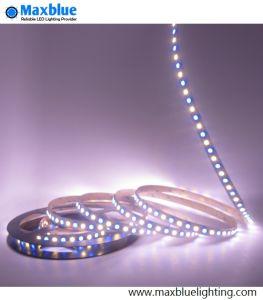 Striscia di SMD5050 RGBW LED usando sul giorno di Natale