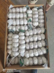 China Normal fresco alho branco com Ggap