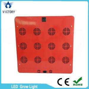 Lo spettro completo LED di alto potere 1000W si sviluppa chiaro per la serra