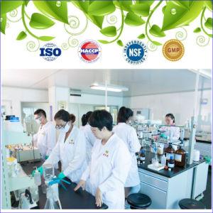 Veggie DHA pour d'huile végétale d'algues supplément