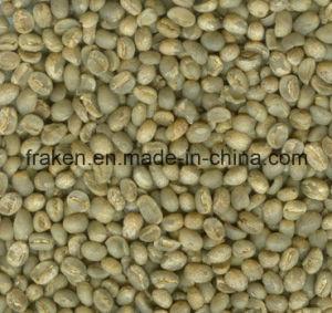 Haute qualité l'acide chlorogénique Extrait de grains de café vert